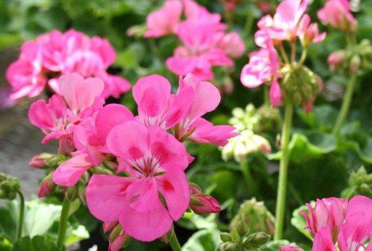 Primavera Colora il tuo Giardino
