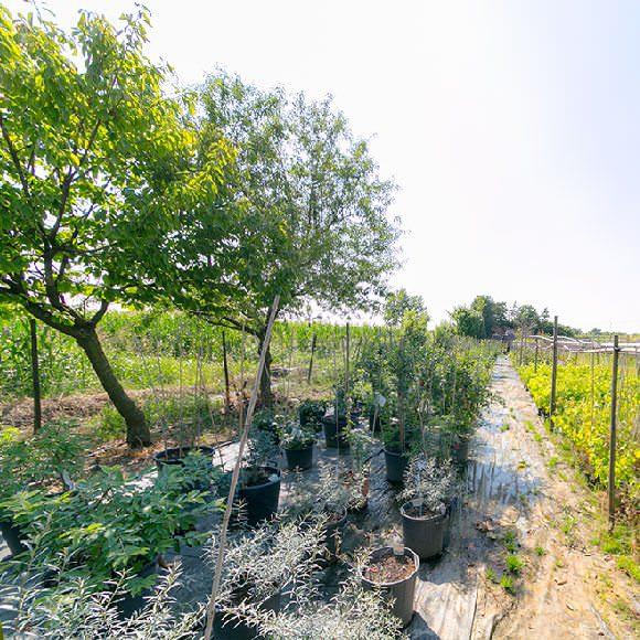 Vivaio Garden Shop Pasini